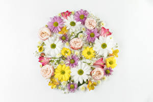 Картинка Хризантемы Альстрёмерия Розы Ромашки Белом фоне Дизайн цветок