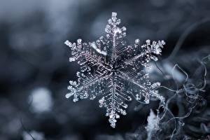 Обои Вблизи Макро Снежинки