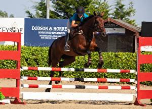 Фотография Конный спорт Лошадь Прыгает Спорт