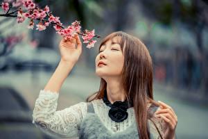Обои Цветущие деревья Азиатка Размытый фон Ветки Шатенка Сакуры молодая женщина