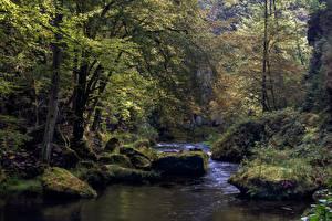 Фотография Лес Речка Камень Чехия Дерево Edmundsklamm, river Kamnitz Природа