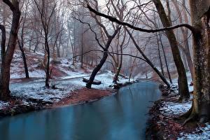 Фотографии Леса Реки Зимние Деревья Снег Тумана