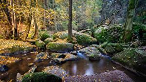 Фото Лес Камень Германия Мох Ручеек Бавария reserve Doost