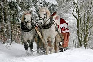 Фото Лошади Новый год Сани Дед Мороз животное