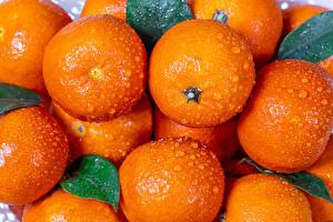 Картинка Мандарины Вблизи Капельки Продукты питания