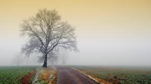Обои для рабочего стола Дороги Поля Деревьев Туман Природа