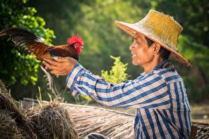 Фотография Петух Азиатки Птица Мужчина Шляпы Рука животное