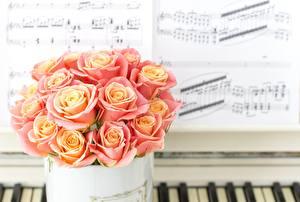 Фотография Роза Букеты Ноты Розовых цветок