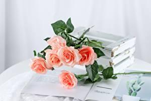 Картинки Розы Столы Журнал Розовый