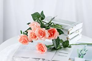 Картинки Розы Столы Журнал Розовый цветок