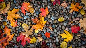 Картинки Камни Осенние Листва Мокрые Природа