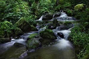 Фото Камень Ручеек Мха Природа