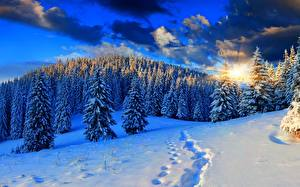 Фотография Рассвет и закат Зима Лес Снегу Лучи света Ели