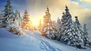 Обои Рассвет и закат Зимние Лучи света Ели Тропинка Снега Природа