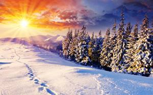 Фото Рассвет и закат Зимние Пейзаж Снега Ели Лучи света Солнца Природа