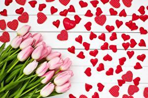 Фотографии День всех влюблённых Тюльпан Сердца Розовый Цветы
