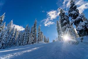 Картинка Зима Снегу Ель Лучи света Природа