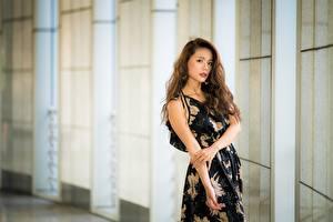 Фотографии Азиатки Боке Рука Платья Шатенки девушка