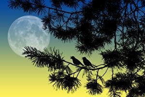 Картинки Птица Векторная графика В ночи Ветка Силуэт Луной