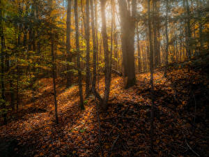 Обои Канада Осенние Лес Дерево Листва Copeland forest near Barrie Природа