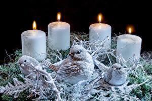 Картинки Свечи Огонь Птицы Новый год Гнездо