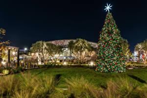 Обои Новый год США Дома Калифорния Елка Газон Ночь Long Beach Города