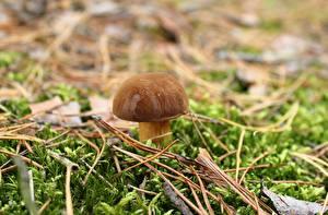 Фото Крупным планом Грибы природа Белый гриб Мох