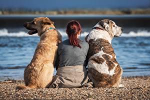 Обои Собака Втроем Сидящие Вид сзади Спины Пляжа Рыжие животное