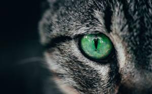Фотография Глаза Вблизи Коты животное