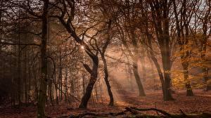Фотография Лес Осенние Деревья Лучи света Природа