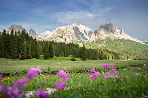 Картинка Италия Горы Луга Пейзаж Альпы Траве Dolomites Природа