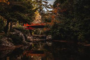 Фотографии Япония Мост Водный канал Дерево Bridge on Miyajima Island Природа