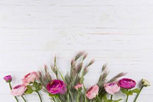 Фотографии Роза Доски Разноцветные Ветки Шаблон поздравительной открытки цветок