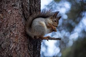Фото Белка Ствол дерева Животные