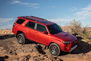 Обои Тойота Внедорожник Красный 2020 4Runner TRD Off-Road автомобиль