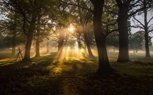 Фотография Деревья Лучи света Трава Природа