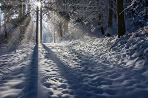 Фотография Зима Снега Тень Лучи света Дерево