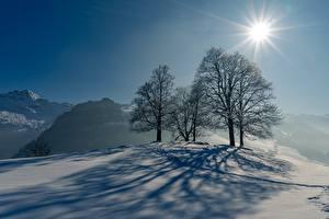 Фотографии Зима Снеге Деревья Тень Солнце Лучи света