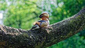 Фото Птица Утка Ствол дерева Mandarin duck животное