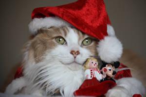 Картинки Рождество Коты Морды Шапка Смотрит Куклы животное