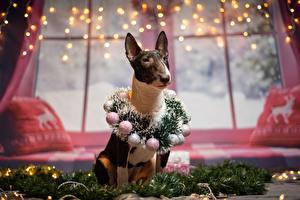 Обои Новый год Собака Бультерьер Венком Шар Гирлянда животное