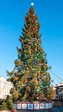 Фото Рождество Италия Рим Елка Шар