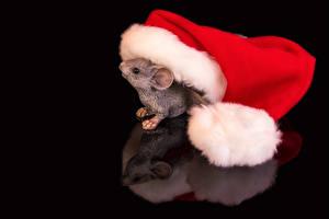 Обои Рождество Мыши На черном фоне Шапка Отражении животное