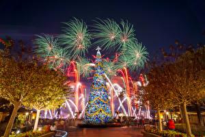 Картинки Рождество Штаты Диснейленд Парк Фейерверк Калифорнии Дизайна Дерево Новогодняя ёлка Природа