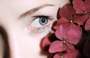 Картинки Вблизи Глаза Смотрит девушка