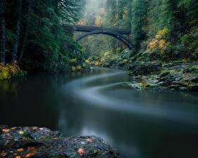 Фото Леса Река Мост Парк США Вашингтон Lewis River, Yacolt, Moulton Falls Regional Park Природа