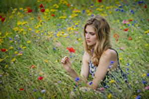 Фотографии Луга Траве Сидящие Viktoria девушка