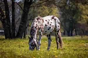 Картинки Лошадь Траве Боке животное
