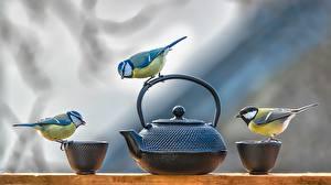 Картинка Чайник Птица Синица Кружки Втроем животное