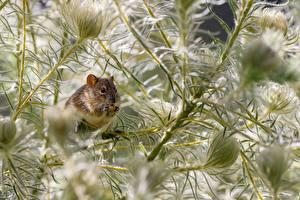 Обои Мыши Ветвь